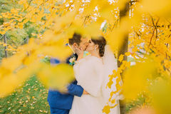 Romantic kiss of newly married couple under autumn tree with yellow leaves Royalty Free Stock Image