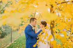 Romantic kiss of newly married couple under autumn tree with yellow leaves Stock Photography