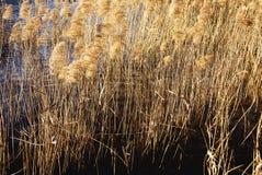 Romantic lake Stock Images