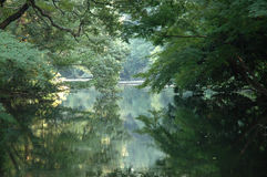 Romantic lake. Slightly misty, the trees, lake and reflection convey a romantic calm Royalty Free Stock Photos