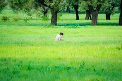 Romantic landscape, fresh air, open countryside stock photos