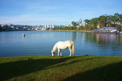 Romantic landscape with horse grazing on lakeshore, restaurant o Stock Photos