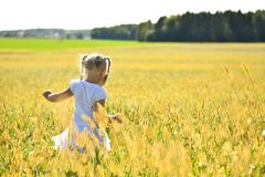 Romantic little girl in white dress walking on grass in field on sunset, looking down, rear view royalty free stock photos