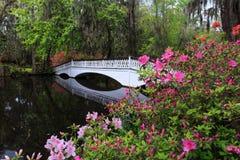 Romantic Long White Bridge with Azaleas Royalty Free Stock Image