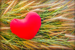 Romantic lovely valentine red heart on grass flower for love background Stock Photos