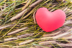 Romantic lovely valentine red heart on grass flower for love background Stock Image
