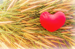 Romantic lovely valentine red heart on grass flower for love background Stock Photography