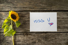 Romantic Miss u message next to a beautiful sunflower. Romantic Miss u message written on white card lying on textured wooden planks next to a beautiful blooming Stock Images