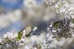 Romantic moment of sparrow Stock Photo
