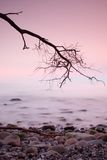Romantic morning. Bended tree above sea level,  boulders sticking out from smooth waves. Pink horizon. With first hot sun rays Royalty Free Stock Photography
