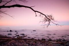 Romantic morning. Bended tree above sea level, boulders sticking out from smooth waves. Pink horizon. With first hot sun rays stock images