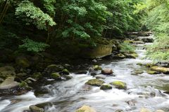 The romantic mountain stream Bode. In the Harz National Park Royalty Free Stock Images
