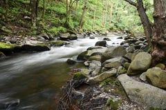The romantic mountain stream Bode Royalty Free Stock Photo