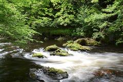 The romantic mountain stream Bode Stock Photos