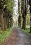 Romantic and mysterious alley path with old big trees in park. Beauty nature landscape. Summer walk royalty free stock image