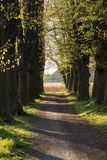 Romantic and mysterious alley path with old big trees in park. Beauty nature landscape. stock photo