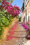 Romantic narrow street with blooming bougainvillea flowers Royalty Free Stock Photos