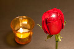 Romantic night, single beautiful red rose and shiny diamond ring Stock Photography