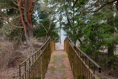 Romantic old bridge in a pine forest Royalty Free Stock Images
