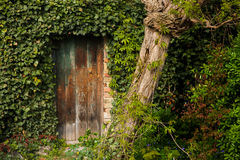 Romantic old wooden garden gate outdoor, surrounded with plants Royalty Free Stock Photo
