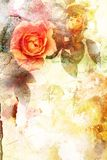 Romantic orange roses background Royalty Free Stock Photos