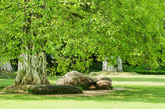 Romantic park. The tree and stone in the Romantic park royalty free stock photography