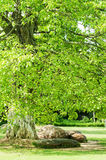 Romantic park. The tree and stone in the Romantic park stock image