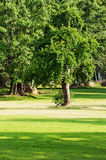 Romantic park. The tree and stone in the Romantic park royalty free stock photos