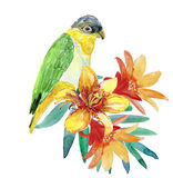 Romantic parrot and exotic flowers Stock Image