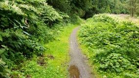 Romantic Path Stock Image