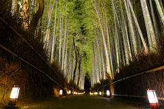 Romantic path through bamboo forest iluminated by lanterns during Arashiyama Hanatouro festival in Kyoto Royalty Free Stock Image