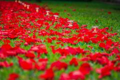 Candles and roses petals path Stock Photo