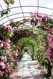 Romantic path into a luxuriant  rose garden Royalty Free Stock Images