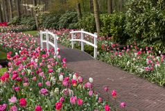 Romantic path in the park between blooming colorful tulips royalty free stock photo