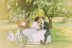Romantic picknick under tree in park. Happy bride drinking tea with her stylish new husband. Decorated bicycle stands near Stock Photography