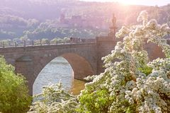 Romantic picture of Heidelberg castle with flowers in the foregr Royalty Free Stock Image