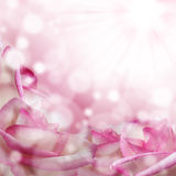 Romantic pink background with roses Royalty Free Stock Image