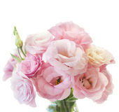 Romantic pink eustoma bunch  on white background Stock Image
