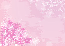 Romantic pink flower background Stock Photos
