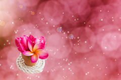 Romantic pink flowers in small vase on dreamy  background Stock Photo