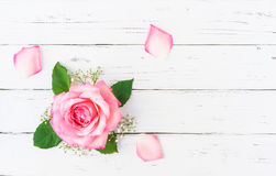 Romantic Pink Rose Blossom. Pink rose blossom and petals on white wood, romantic floral background with copy space Royalty Free Stock Photography