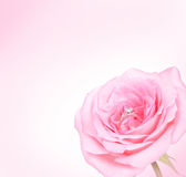 Romantic Pink Rose with diamond ring. Beautiful romantic Pink Rose with diamond wedding ring on pink background Royalty Free Stock Image