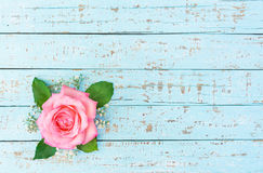 Romantic Pink Rose Flower. Beautiful pink rose on pastel blue wood, romantic floral background with copy space Royalty Free Stock Photography