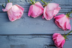 Romantic pink roses on gray background Stock Photos