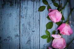 Romantic pink roses on green background Royalty Free Stock Photo