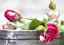 Romantic pink roses on grey wooden tray Royalty Free Stock Photography