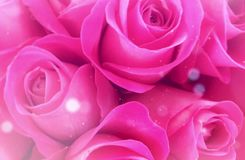 Romantic pink roses lights valtenine
