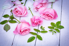 Romantic pink roses on white painted background Royalty Free Stock Photos
