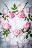 Romantic pink roses on white painted background Stock Photography