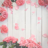Romantic pink roses on white wooden background Royalty Free Stock Images